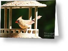 At My Birdfeeder Greeting Card