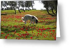 At Ruchama Forest Israel 1 Greeting Card