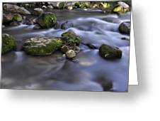 At The Banias River 1 Greeting Card
