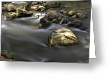 At The Banias River 2 Greeting Card