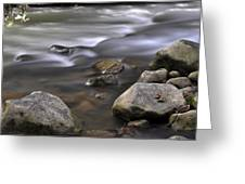 At The Banias River 3 Greeting Card