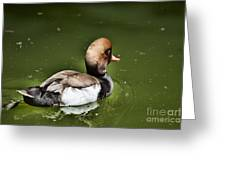 At The Duck Pond Greeting Card