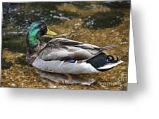 At The Duck Pond V5 Greeting Card