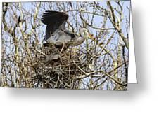 At The Heronry Greeting Card