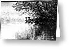 At The Lake-39 Greeting Card