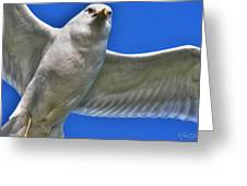 At Your Disposal The Waiting Gull Greeting Card
