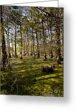 Atchafalaya Swamp   #6913 Greeting Card
