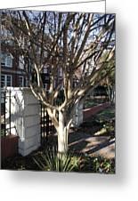 Atlanta Tree Greeting Card