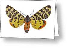 Atlantarctia Tigrina Moth Greeting Card