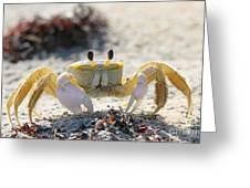 Atlantic Ghost Crab 2760 Greeting Card