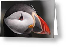 Atlantic Puffin Portrait Greeting Card