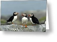 Atlantic Puffins (fratercula Arctica Greeting Card