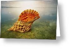 Atlantic Trumpet Triton Shell Greeting Card