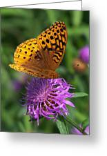 Atlantis Fritillary Butterfly Greeting Card