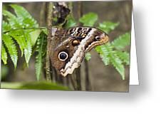 Atreus Owl Portrait  Costa Rica Greeting Card
