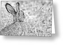 Attentive Hare Greeting Card