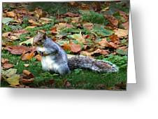 Attentive Squirrel Greeting Card