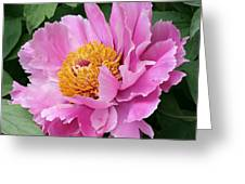 Attractive Pink Peony Greeting Card