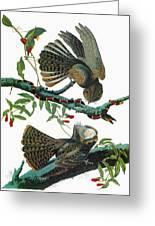 Audubon Chuck-will's Widow Greeting Card