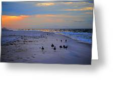 August Beach Morning With The Sea Gulls Greeting Card