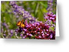 August Colors Greeting Card