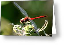 August Dragonfly  Greeting Card