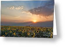 August Dreams Greeting Card