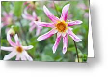 August Flower Gardens Greeting Card