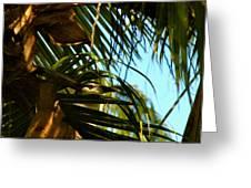Auku'u The Black Crowned Night Heron Greeting Card