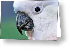 Australian Birds - Cockatoo Up Close Greeting Card