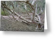 Australian Native Tree 4 Greeting Card