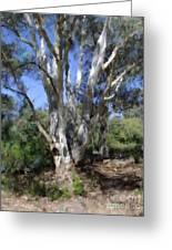Australian Native Tree 5 Greeting Card