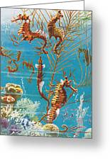 Australian Seahorses Greeting Card