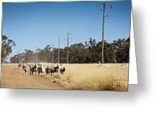 Australian Sheep Greeting Card