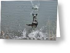 Australian Shepherd Fun At The Lake Chasing The Ball Greeting Card