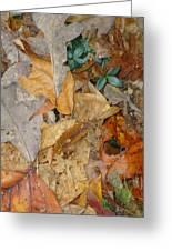 Autum Leaves Greeting Card by Glenn Calloway