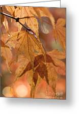 Autumn Acer Greeting Card