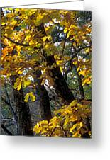Autumn Greeting Card by Anonymous