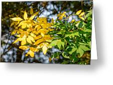 Autumn Ash Tree Leaves Under The Sun Greeting Card