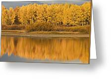 Autumn Aspens Reflected In Snake River Greeting Card