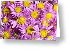 Autumn Aster Greeting Card