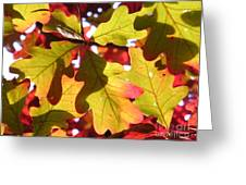 Autumn At Its Best Greeting Card
