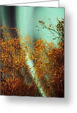 Autumn Aurora Greeting Card