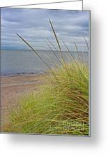 Autumn Beach Grasses Greeting Card