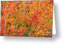 Autumn Outbeats Summer Greeting Card