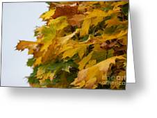 Autumn Beauty 6 Greeting Card
