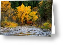 Autumn Beauty In Boise County Greeting Card
