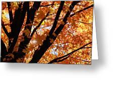 Autumn Beauty Greeting Card