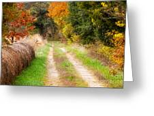 Autumn Beauty On Rural Dirt Road Greeting Card