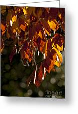 Autumn Beech Leaves Greeting Card